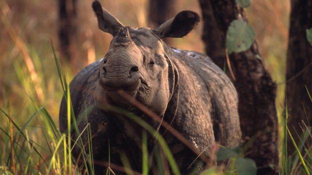 Торгівля вимираючими тваринами приносить $19 млрд доходу щороку