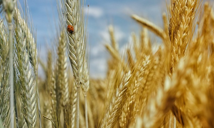 «Кернел» купив агрохолдинг «Українські аграрні інвестиції»
