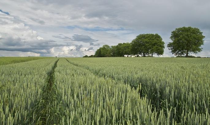 Кабмін: держземлі сільгосппризначення будуть здаватися в оренду терміном до 7 років
