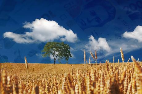 Рента за природні ресурси: скільки грошей отримав держбюджет