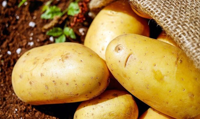 95% всього обсягу української експортної картоплі купила Білорусь