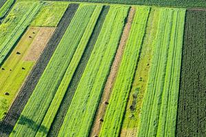 Путівник з перетворень: в якому стані аграрна реформа