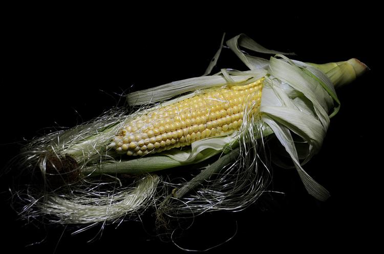 ЄС вводить мито на імпорт кукурудзи