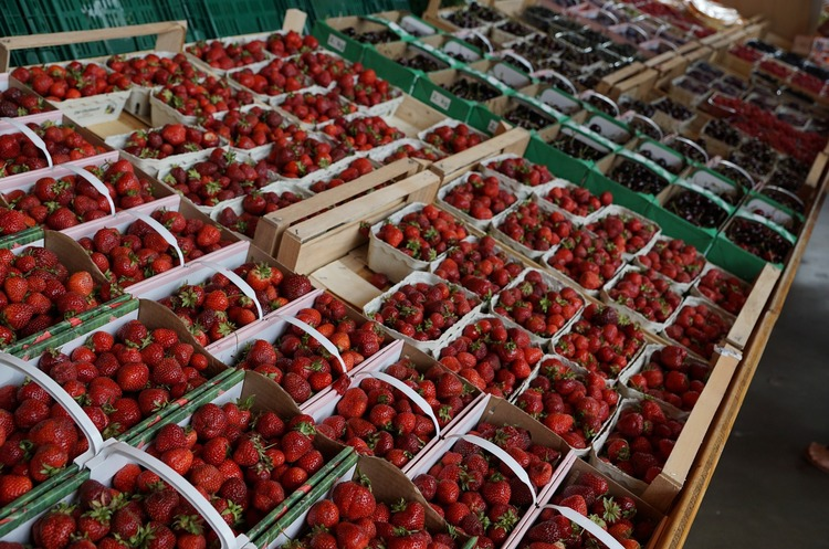 Українська сільгосппродукція подорожчала на 10% з початку року