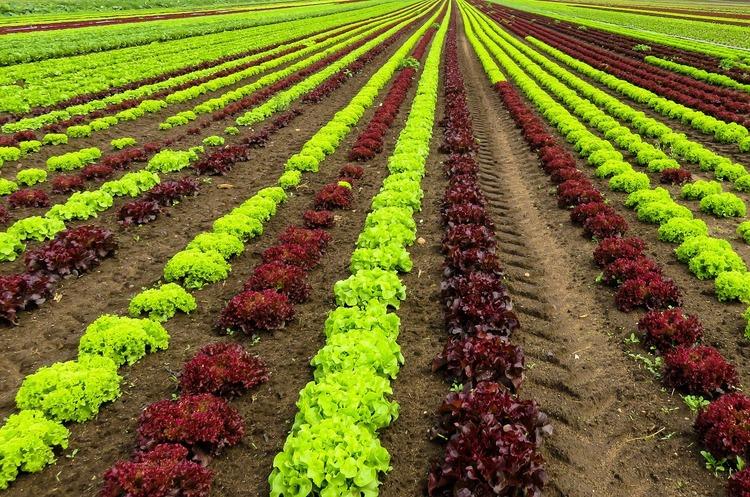 США: Україна має можливості стати світовим лідером з експорту овочів та фруктів