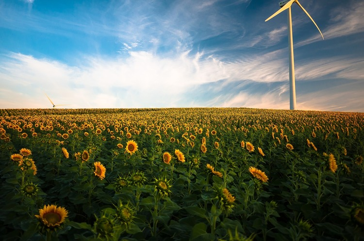 Україна збільшила виробництво соняшникової олії на 36%