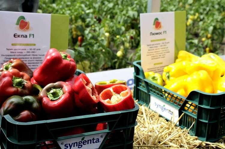 Syngenta вивчає інвестпроект з утилізації пестицидів в Україні