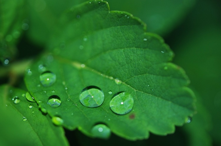 Вчені зніматимуть показники з листя рослин, щоб визначити, коли їх слід поливати