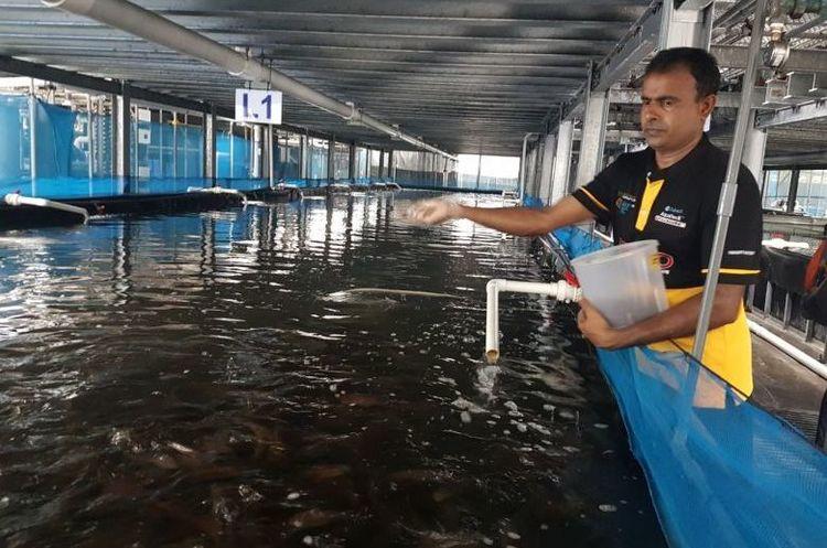 У Сінгапурі розробили вертикальні ферми для вирощування риби