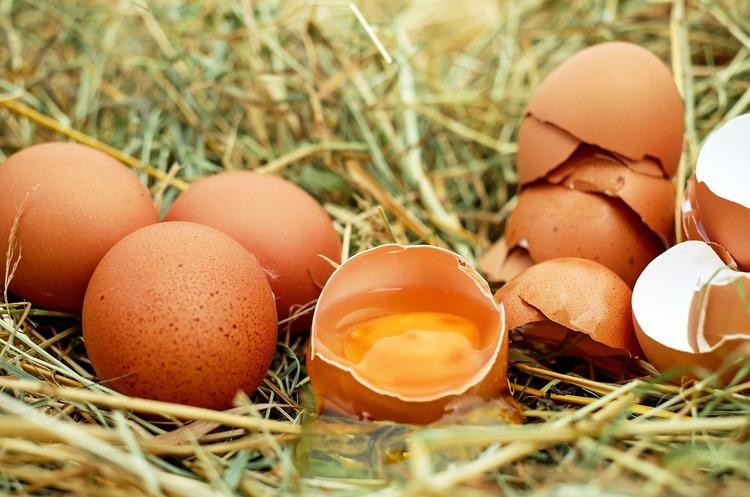 «Овостар Юніон» отримав дозвіл на експорт яєць до ЄС