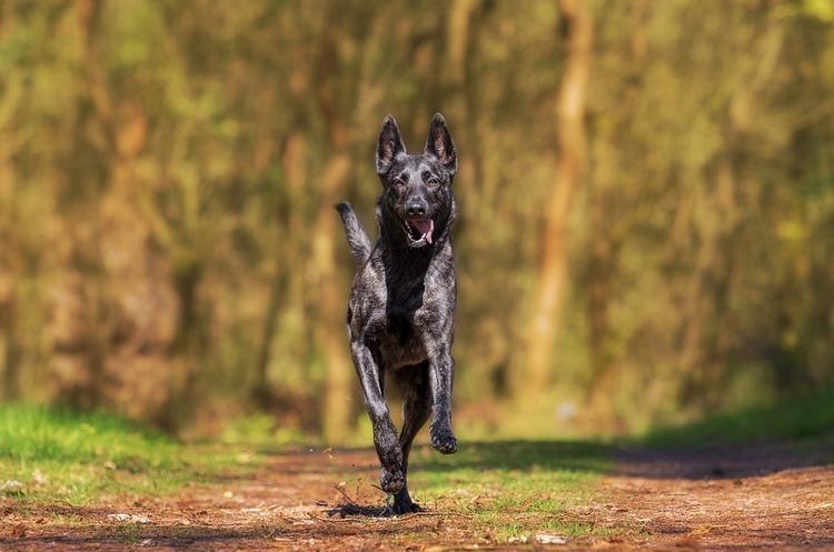 Сервіс із пошуку «няньки для Вашого собаки» отримав 5 млн євро інвестицій