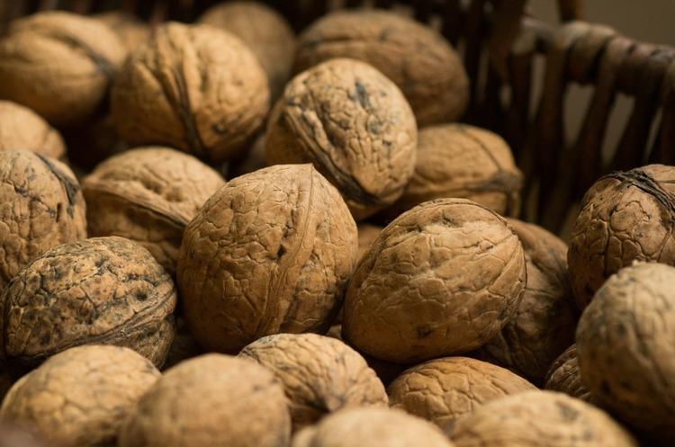 Очікується зростання обсягів виробництва волоського горіха