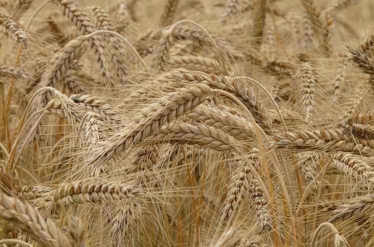 Колишні робітники Louis Dreyfus створили зерноторгову компанію в Україні