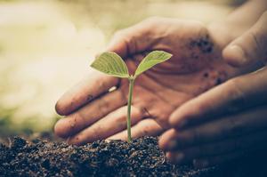 Экспериментальный участок: что нового выращивают украинские фермеры