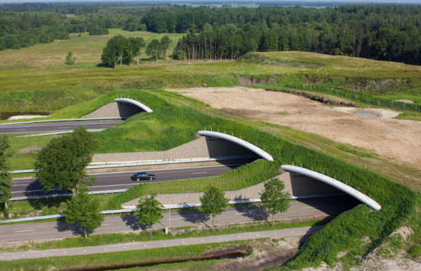 В Україні побудують екодуки – переходи понад дорогами для диких тварин