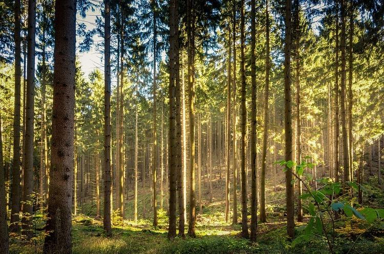 ЄБA: Кабмін переписав Стратегію реформування лісогосподарства під нового держмонополіста