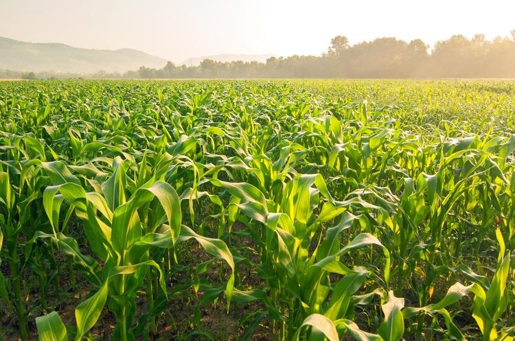 Україна експортувала 16 млн тонн зернових