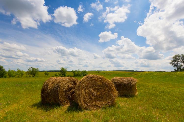 Інвестори з Чехії заявили про наміри розширювати виробництво енергії з біомаси в Україні