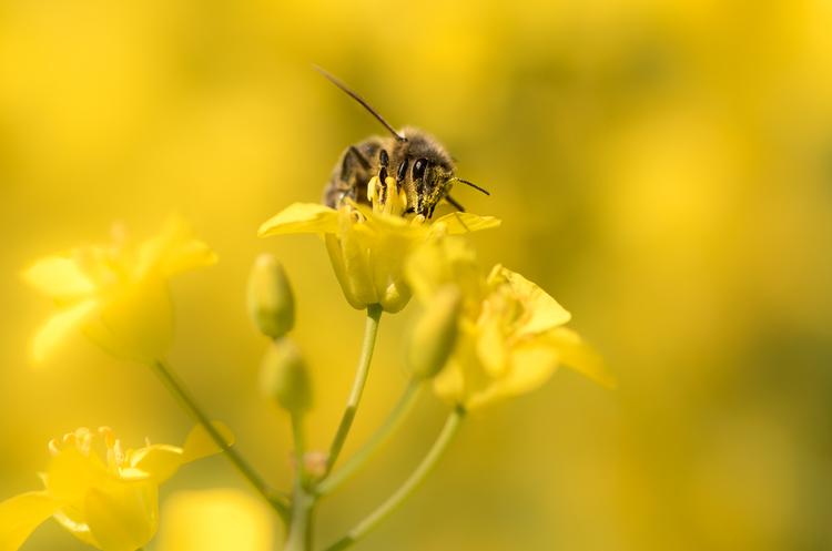 Держспоживслужба хоче створити єдиний реєстр бджолярів України