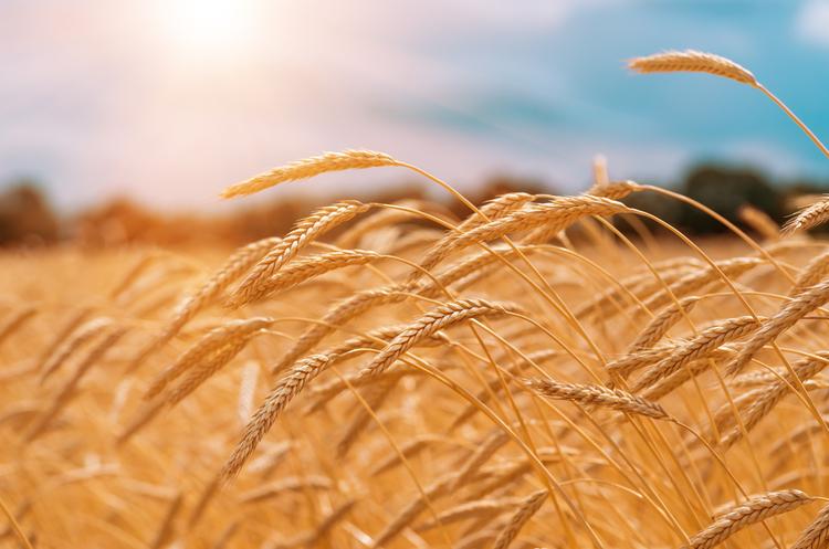 ДПЗКУ профінансувала сільгоспвиробників більше ніж на 100 млн грн