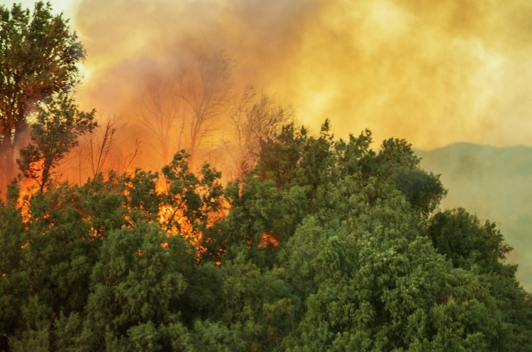 Сполученими Штатами шириться масштабна пожежа: 200 000 осіб уже евакуйовано (ВІДЕО)