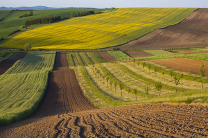 Зимова консервація: чи була готова Україна до вільного ринку землі