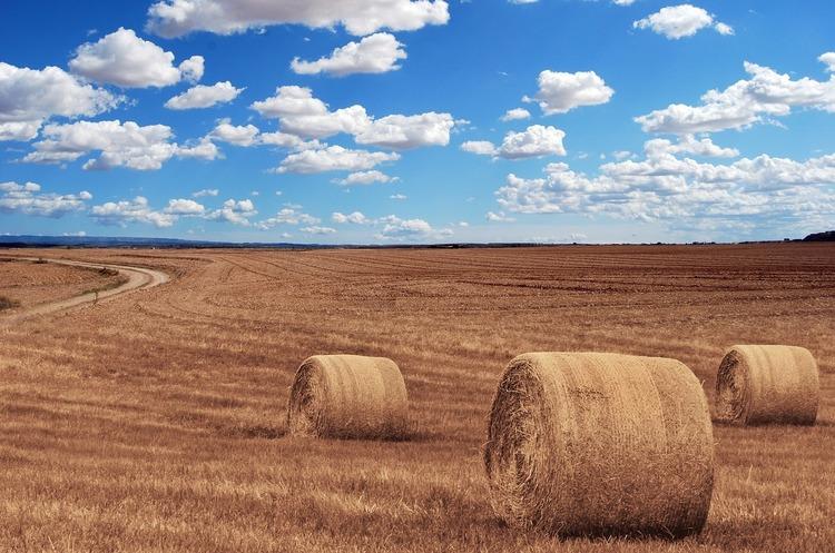 Мінсільгосп США покращив прогнози експорту української пшениці