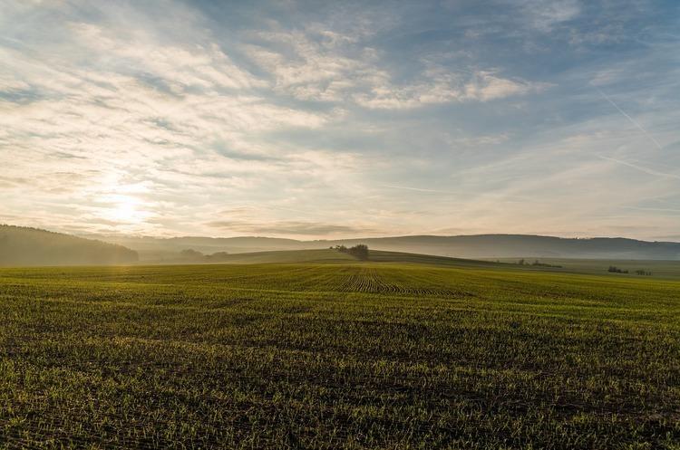 Держгеокадастр здав у оренду понад 37 000 гектарів держземлі цього року