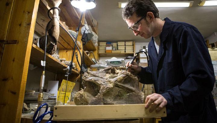 Науковці відкрили новий вид динозаврів