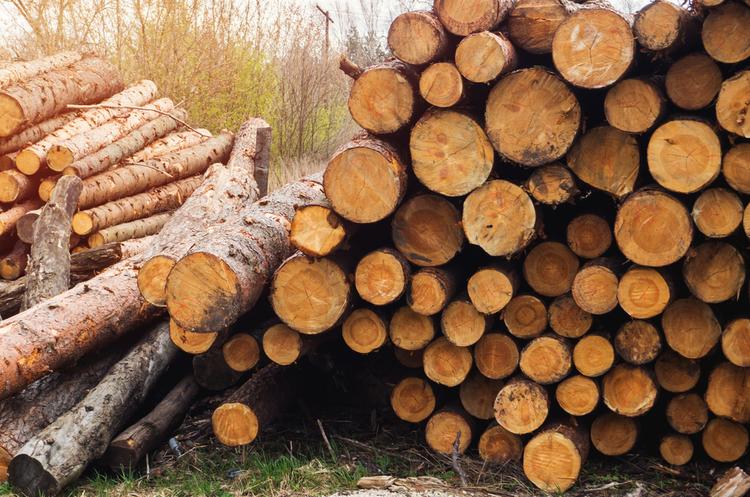 """Результат пошуку зображень за запитом """"продаж деревини"""""""