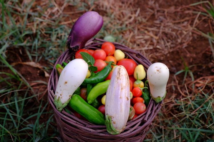 Україна нарощує обсяги експорту до ЄС органічної продукції
