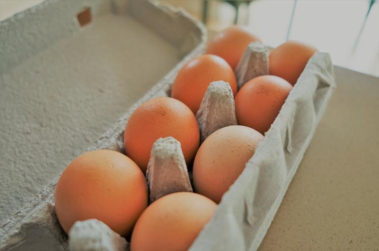 Агрофірма Бахматюка отримала дозвіл на експорт яєць и яєчніх продуктів до ЄС