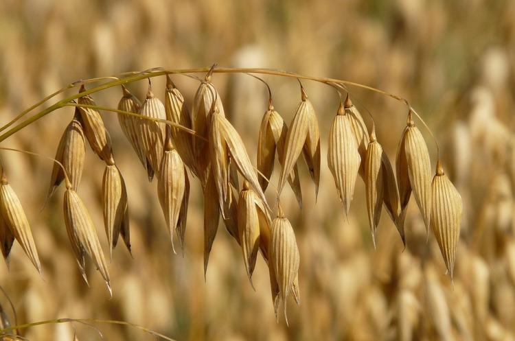 Україна наростила експорт зернових утричі за останні 7 років