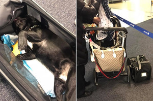 Знову United Airlines: на борту літака з вини стюардеси загинув собака
