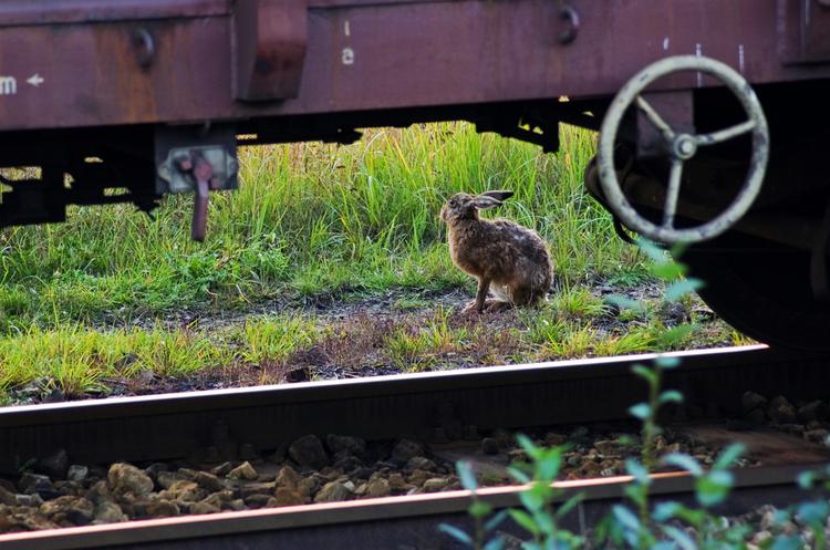 «Укрзалізниця» призначила додаткові поїзди на Великодні свята