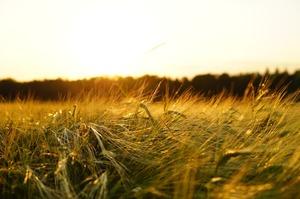 ДПЗКУ постачатиме зернову продукцію до Катару