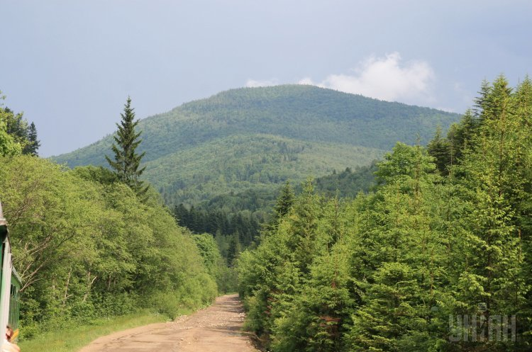 Верховна Рада підтримала в першому читанні заборону на вирубку карпатських лісів