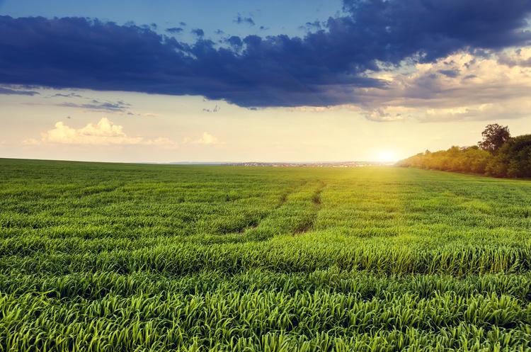 Кабмін відновить роботу штабів по боротьбі з рейдерством в аграрній сфері – Петренко