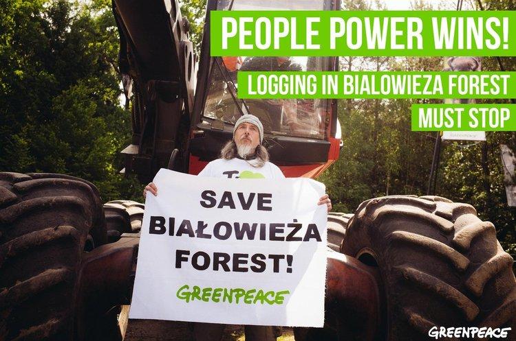Суд ЄС визнав, що вирубуючи Біловезьку пущу, Польща порушила закони ЄС