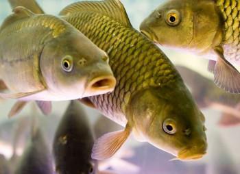 «Рибному місцю» у Київській області шукають нових власників. За $2,9 млн