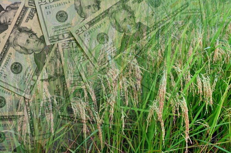 Мінагропрод: Україна засіяла ярі зернові та зернобобові (з кукурудзою) на 90% прогнозованих площ