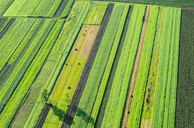 Україна на середину травня знизила експорт зернових на 9%