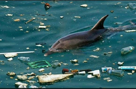 У Чорному морі вдвічі більше пластику, ніж в інших європейських морях – дослідження
