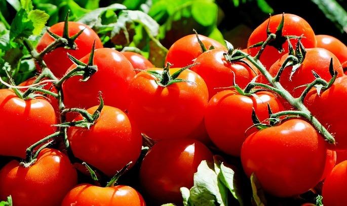 IFC надасть українському виробникові томатної пасти $17 млн