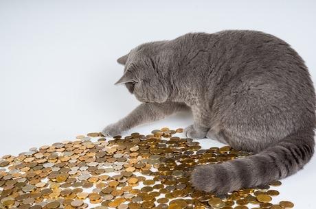 Дрібні хижаки: що чекає на сектор мікрокредитування в Україні