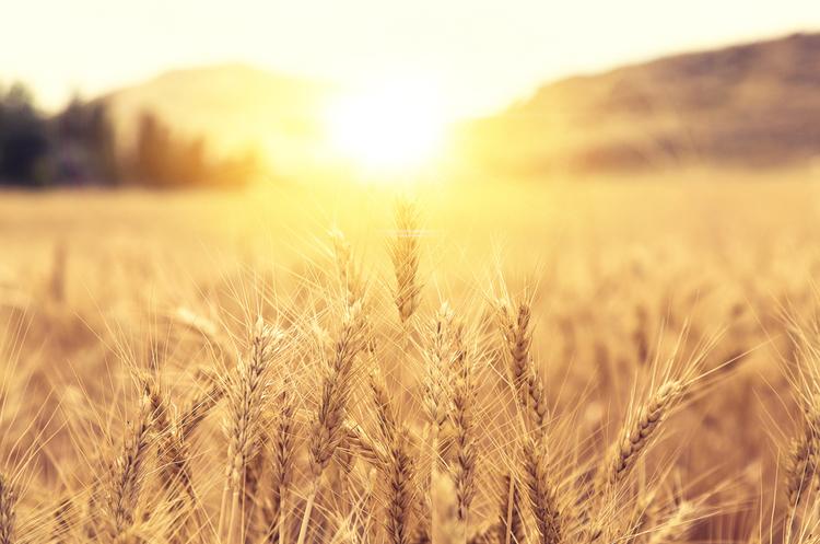 Kadorr Group планує інвестувати в розвиток сільського господарства понад $400 млн