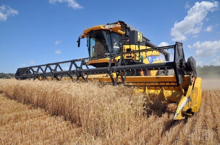 Україна вже намолотила 22,4 млн тонн ранніх зернових
