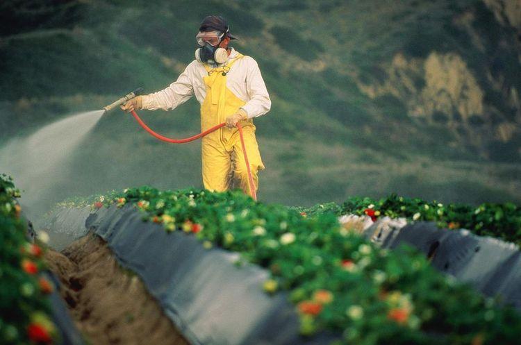 Monsanto виплатить $289 млн американцю, який захворів на рак через їхній пестицид