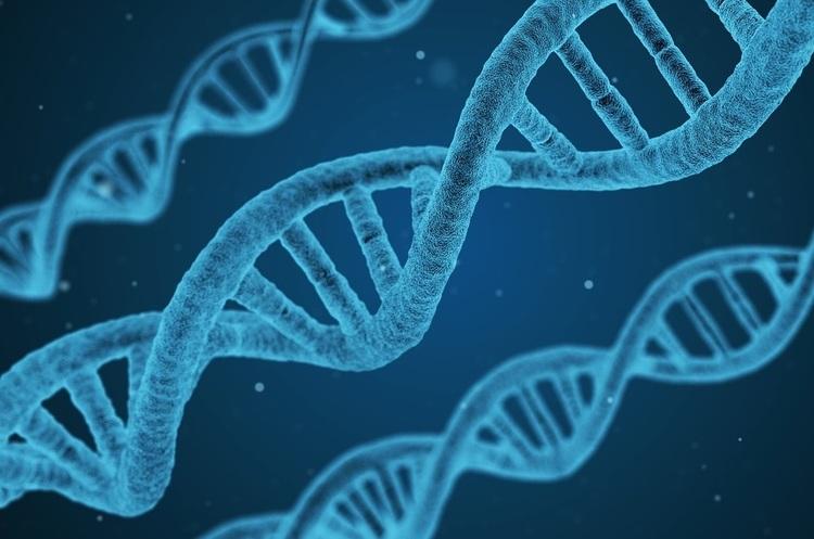 Влада Японії дозволить вченим втручатися в гени людського ембріона