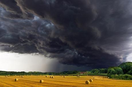 Годувальниця на дієті: скільки недоотримує український агросектор